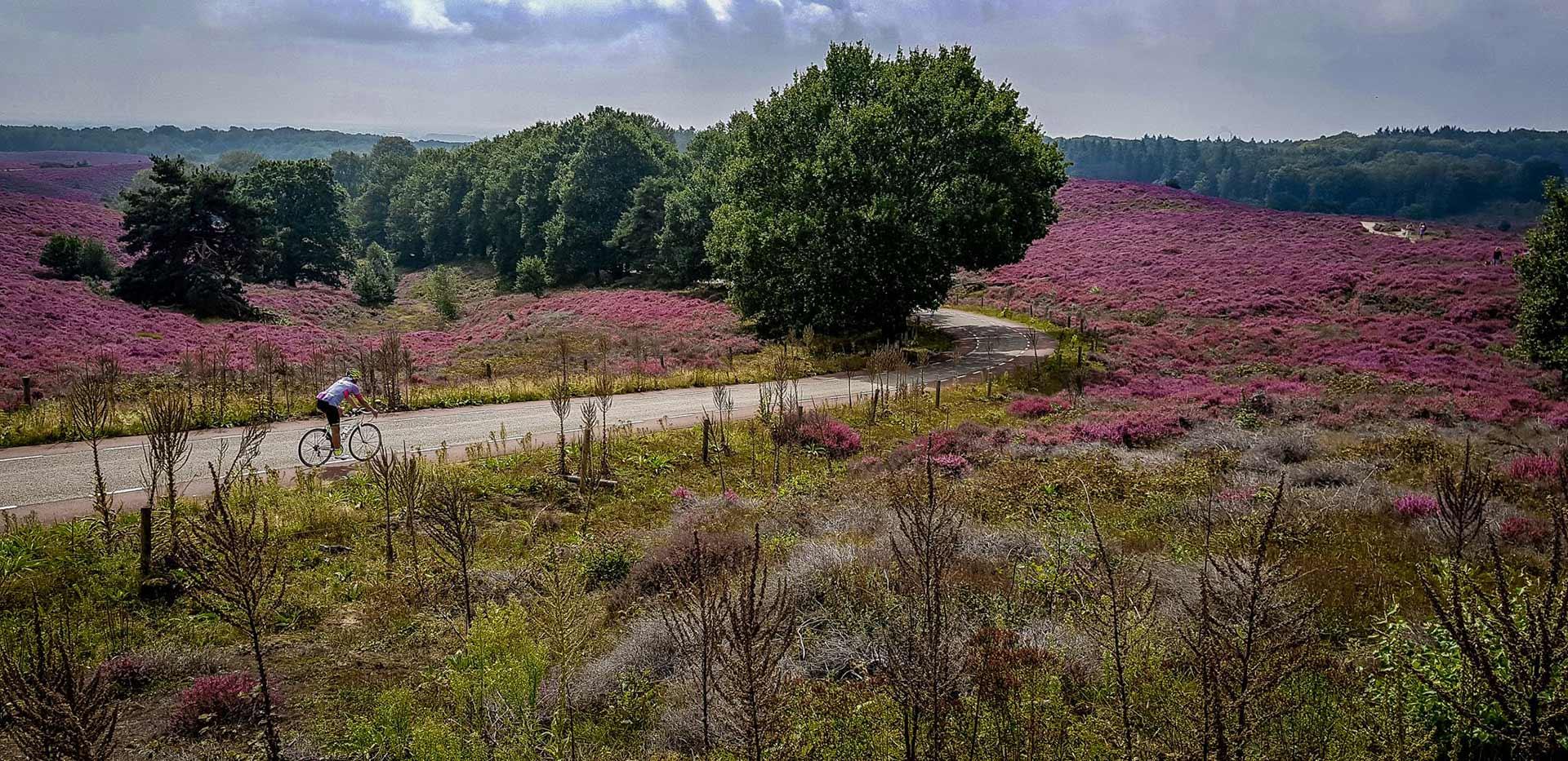De Posbank bij Arnhem